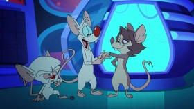 Animaniacs 2020 S01E08 XviD-AFG EZTV